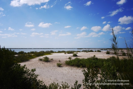 Wetland areas