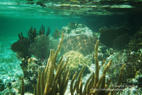 Beautiful and delicate coral reefs
