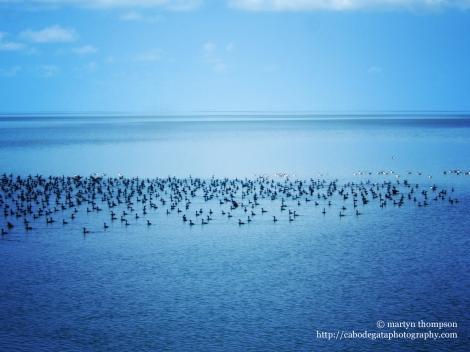 Bird population of wetlands