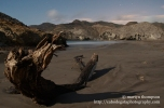 Washed up piece of tree, Playa de Mónsul
